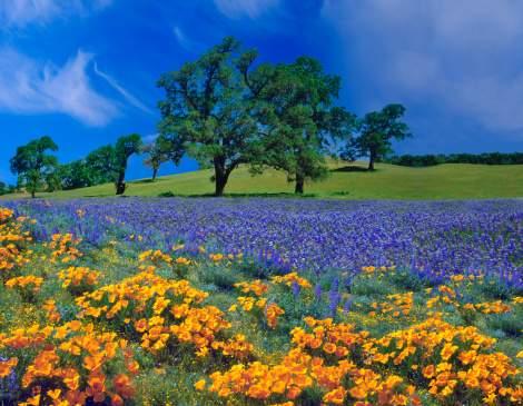 oak tree flowers istock